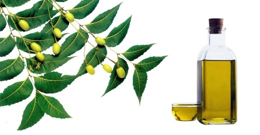 Image result for neem oil on belly button